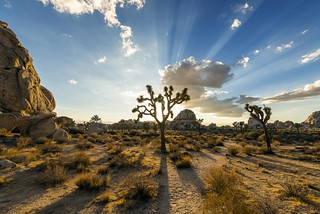 Joshua Tree Magic | by Christopher.Michel