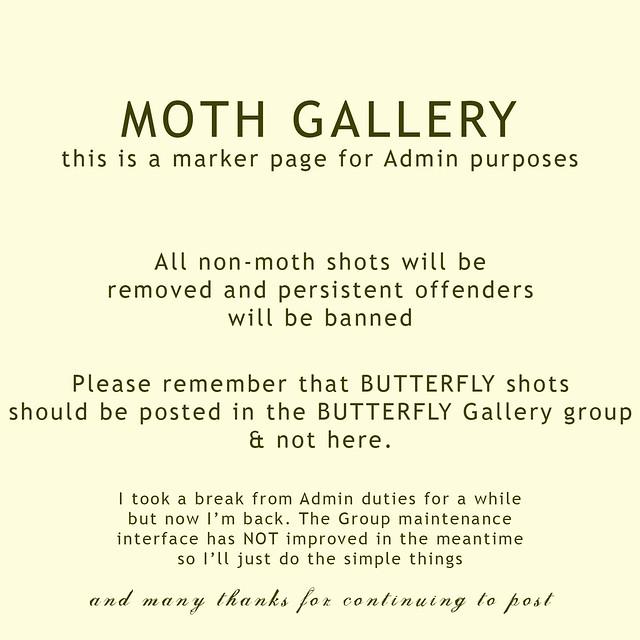 GalleryMarkerMoth
