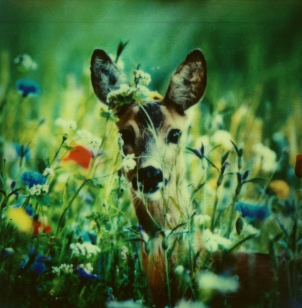 #Roidweek Day 5, Picture 14: Dreamy Deer