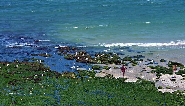 E  con  la  bassa  marea tutti a  cercare frutti  di  mare