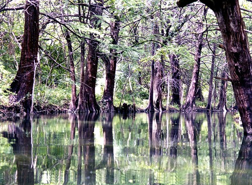 trees green water landscape texas springs hillcountry wimberley