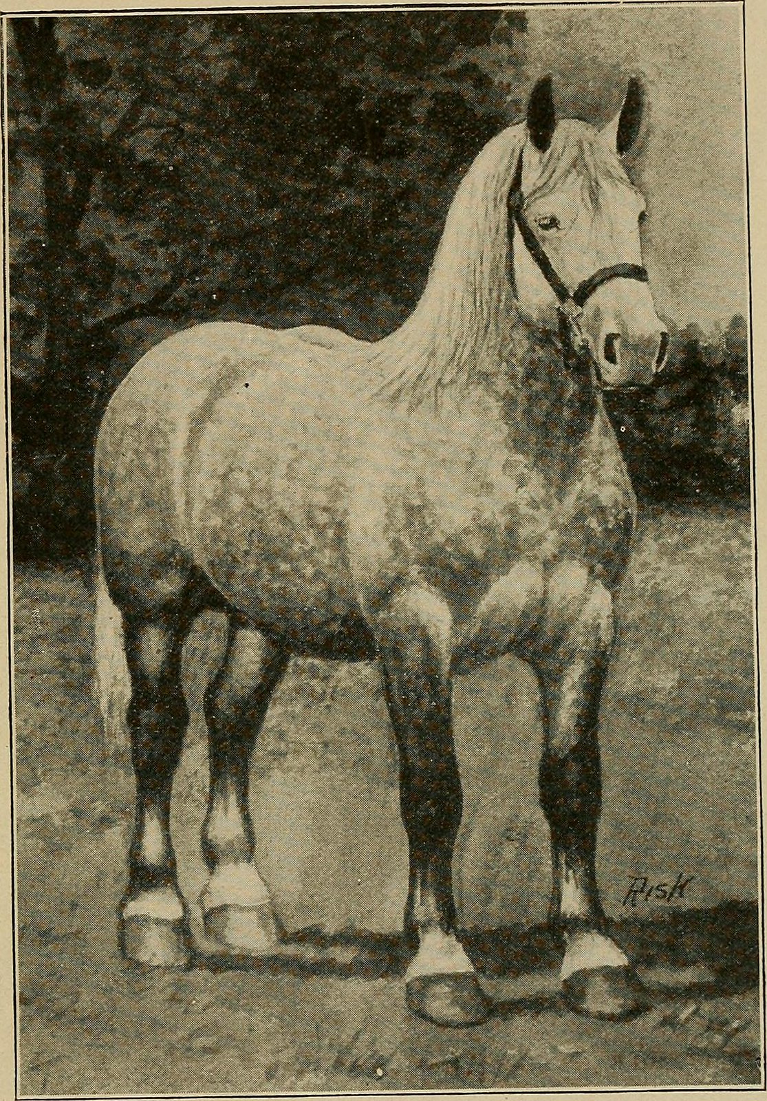 Percheron - Horse Scanner