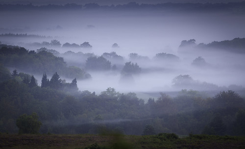 england mist misty forest sunrise woodland sussex woods east ashdown