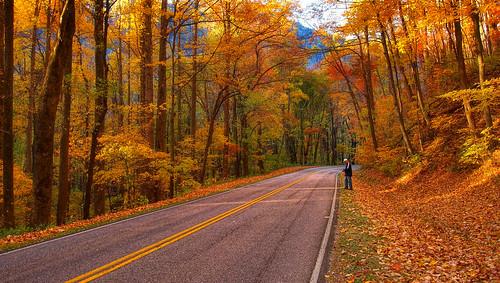 autumn fall tennessee fallcolors olympuspen easterntennessee greatsmokymountainnationalpark olympuspenepl1