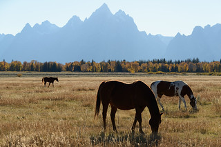 Cathedral Group, Grand Teton NP | by Tucpasquic