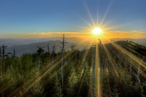 smoky mountains sunset starburst tennessee pine tree sky national park parks sun clingmans dome