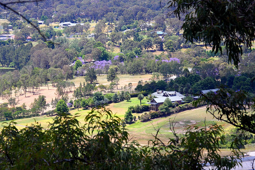 bluemountains nsw scenic jacaranda