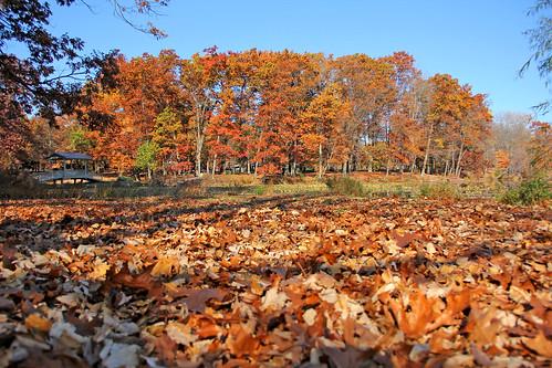 autumn autumnphotography autumncolors autumnfoliage autumncolor fallfoliage fallfoliagephotography fall fallcolors orange gold brown wingfootlakestatepark leaves trees