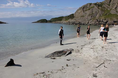 Dead Pilot whale on Scoor Beach | by Guy R