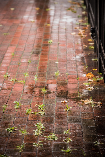 city red urban detail brick texture geometric wet grass rain vintage way outdoors design weeds weed pattern landscaping path walk background traditional peaceful ground surface row sidewalk walkway material rough tradition shape footpath pathway textured pavers bricklayer pedestrianwalkway hardscape