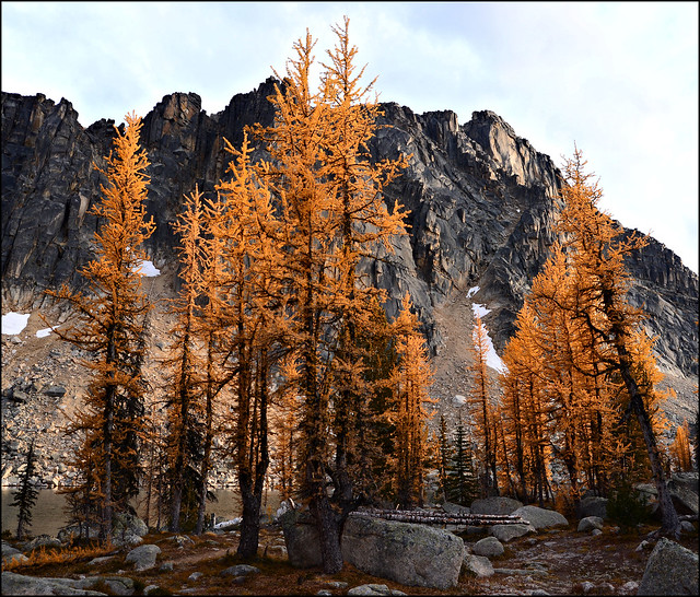 Larch at Upper Cathedral Lake 2