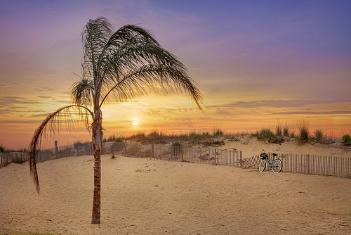 49th Palm | by E. B. Walker Photography