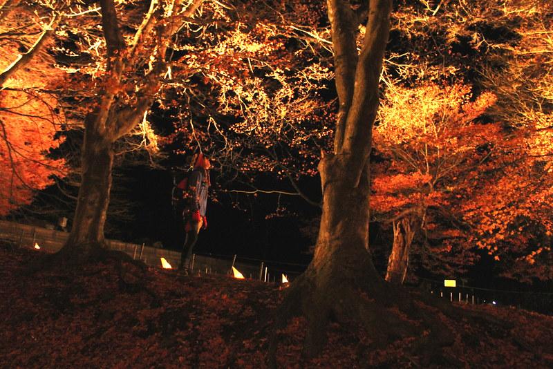 河口湖の紅葉ライトアップ
