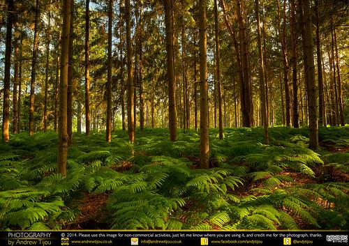 uk trees england forest nikon europe unitedkingdom surrey cobham ferns hdr painshillpark d7000 andrewtijou