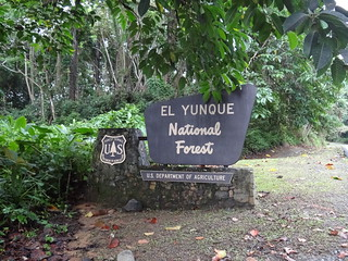 El Yunque National Forest | by ShanMcG213