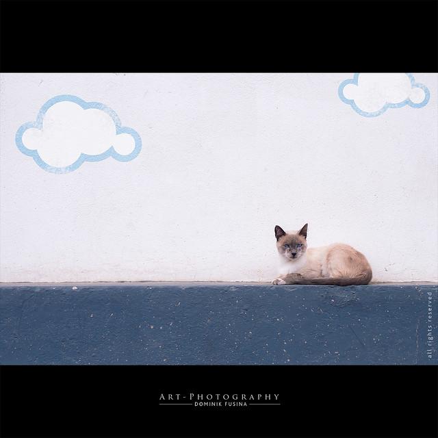 Un chat sur l'horizon