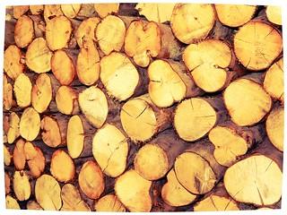 Wood | by Dai Lygad