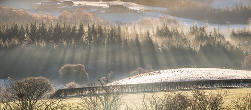 trees mist rays roseberrytopping northyorksmoors northyorkshiremoors yorkshire aytonbanksfarm frost morning canon760d sigmaaf1770mmf2845dcmacro