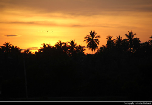 tissamaharama තිස්සමහාරාමය tissa palm tree palms trees silhouette silhouettes red yellow orange glow cloud clouds cloudy landscape scenery scenic sunset ocaso sonnenuntergang coucherdesoleil pôrdosol tramonto закат zonsondergang zachódsłońca solnedgång solnedgang auringonlasku apus залез matahariterbenam mặttrờilặn 日落 日没 evening sun light sri lanka ශ්‍රී ලංකා இலங்கை 斯里蘭卡 スリランカ 스리랑카 шриланка سريلانكا श्रीलंका ประเทศศรีลังกา