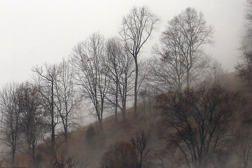 janbuchholtz leicester northcarolina trees clouds landscape