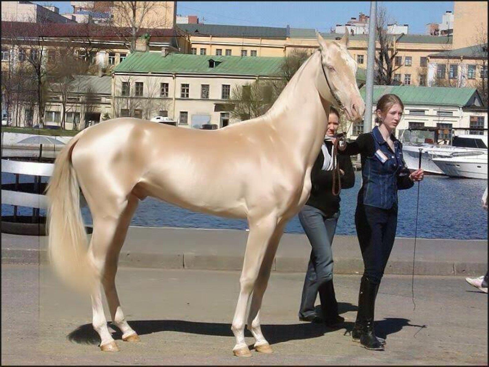 アハルテケ - Horse Scanner