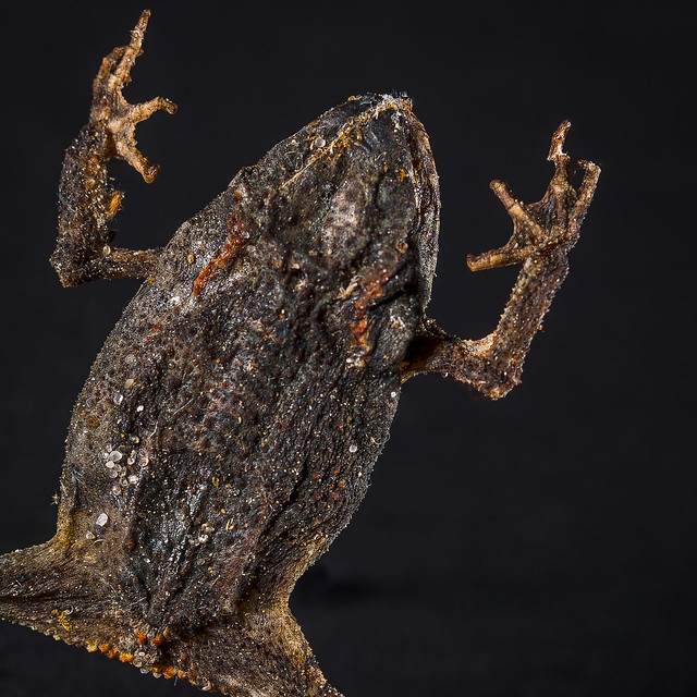 Tribute to the famous Monty Python's Crunchy Frog