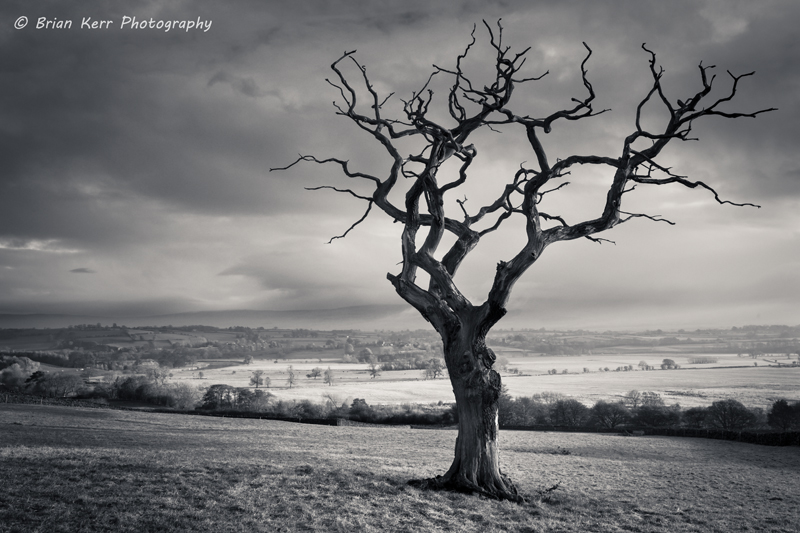 Old Dead Tree | The old dead tree looking out over the Eden … | Flickr