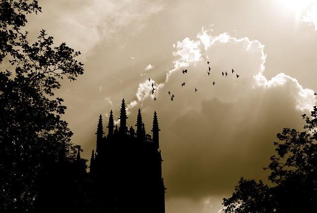 York Minster pigeons