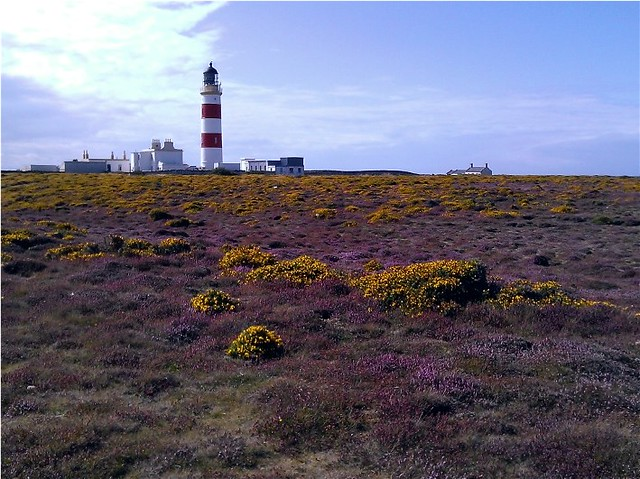 Point of Ayre, Gorse and Heather