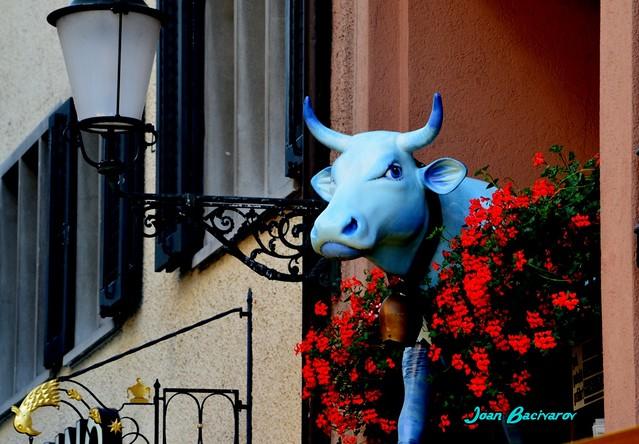 Old Zurich: Blue Swiss Cow
