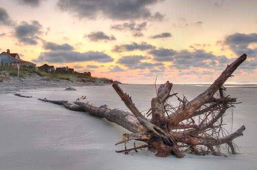 travel tree beach sc sunrise landscape pentax southcarolina hiltonhead hdr kx hhi beachsunrise beachlandscape hdrsunrise hdrlandscape