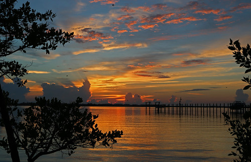 blue trees orange tree water clouds sunrise florida lagoon orangeandblue indianriver martincounty indianriverlagoon pwpartlycloudy sewallspointflorida