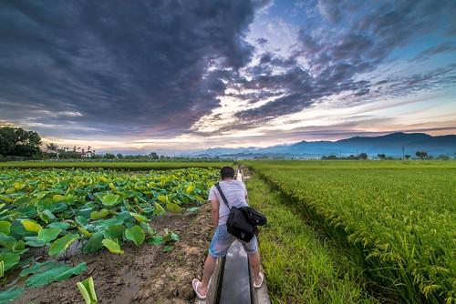 sunrise nikon lotus taiwan 台南 f28 荷花 日出 d600 雲彩 白河 14mm 火燒雲 samyang 竹子門