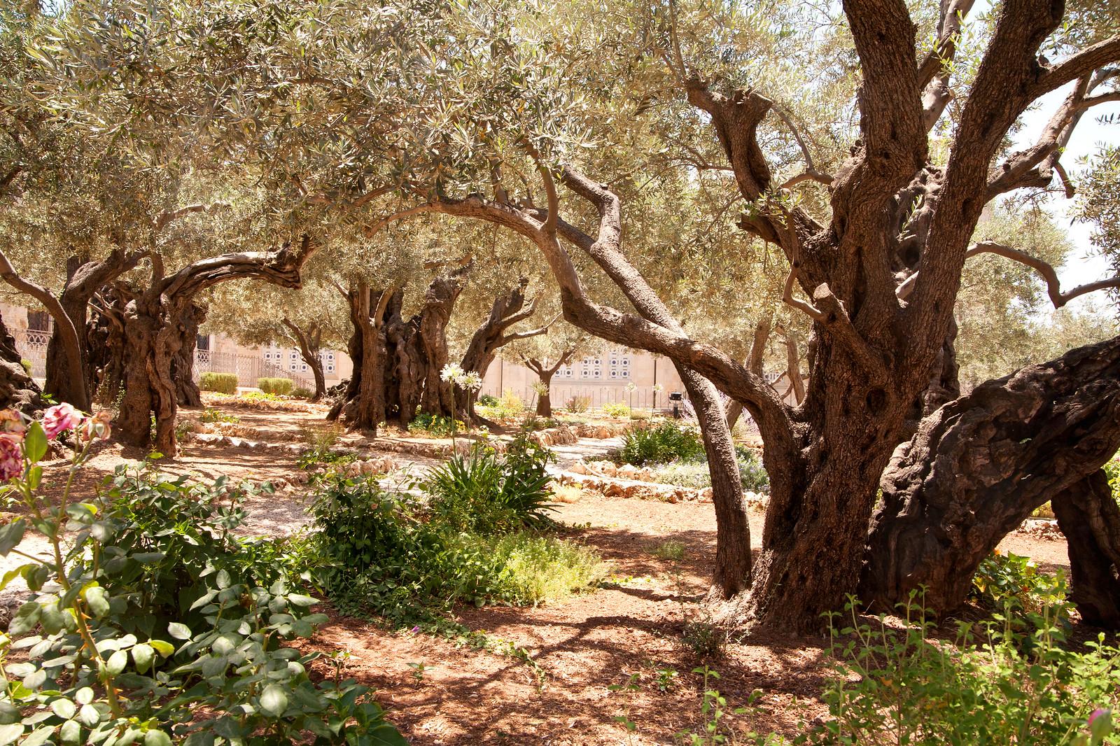 Jerusalem_Church of All Nations_Garden_Noam Chen_IMOT