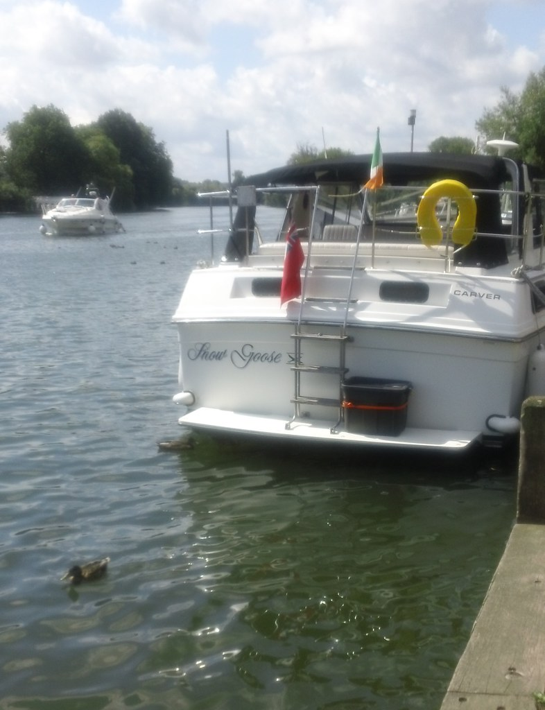 Snow Goose; Thames; Marlow