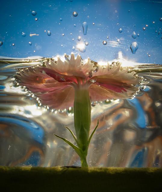 Underwater Bloom- Explore 8/13/2014
