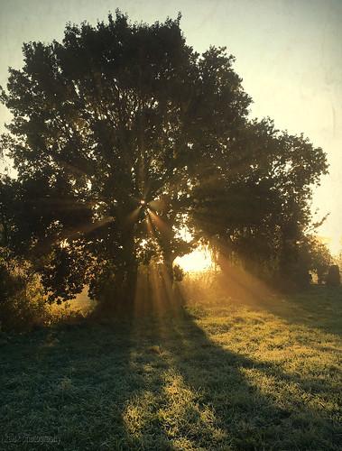 vockesaertpolder polder delft middendelfland kelskphotography zuidholland holland nederland netherlands bomen trees sunrise zonsopkomst mist nevel herfst textuur texture