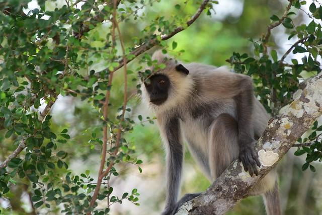 Yala National Park, Sri Lanka, August 2016, D810 563-1