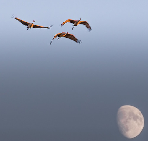 crex meadow fish lake wildlife areas northwestern wisconsin sandhill cranes rising moon waxing fall sunset