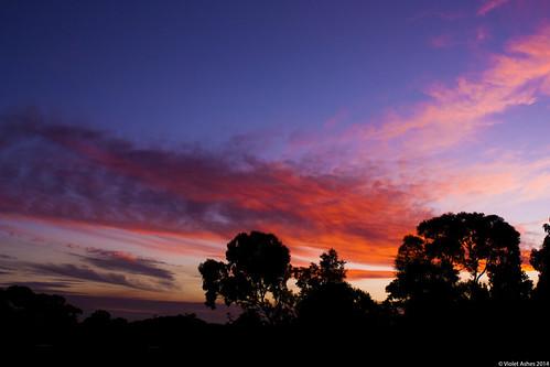 sunset silhouette canon sunsets australia southaustralia gawler canonphotography sunsetphotography canoneos450d sunsetaday violetashessunset corpril violetashessunsettumblrcompost83607145633sunset113