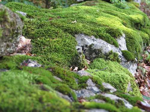 Mauer mit Moos - wall with moss | by meret.fuchs