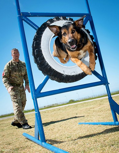 RAF Police Dog Training | by Defence Images