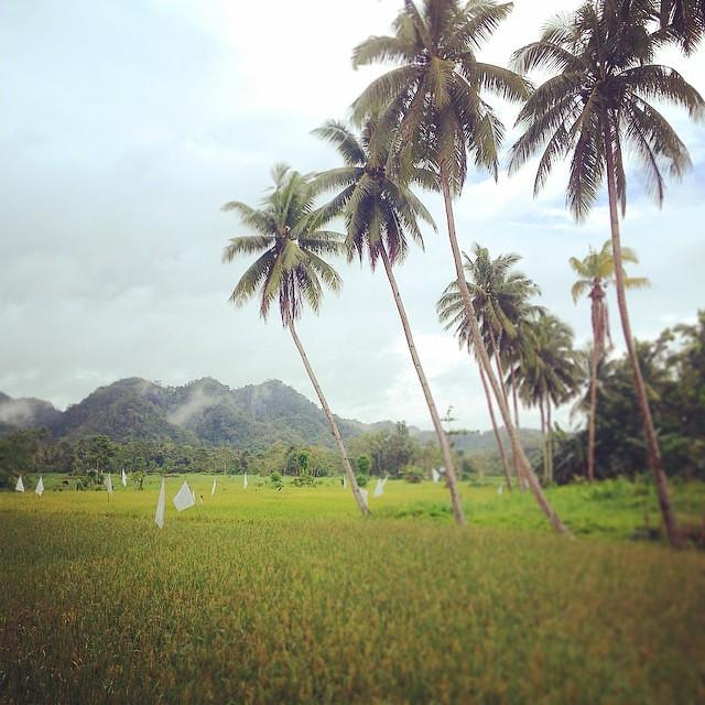 Las Terrazas De Arroz En Bohol Filipinas Son Inmensas S