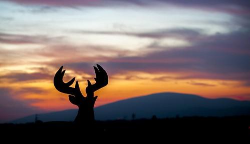 ireland sunset deer tipperary munster carrick suir