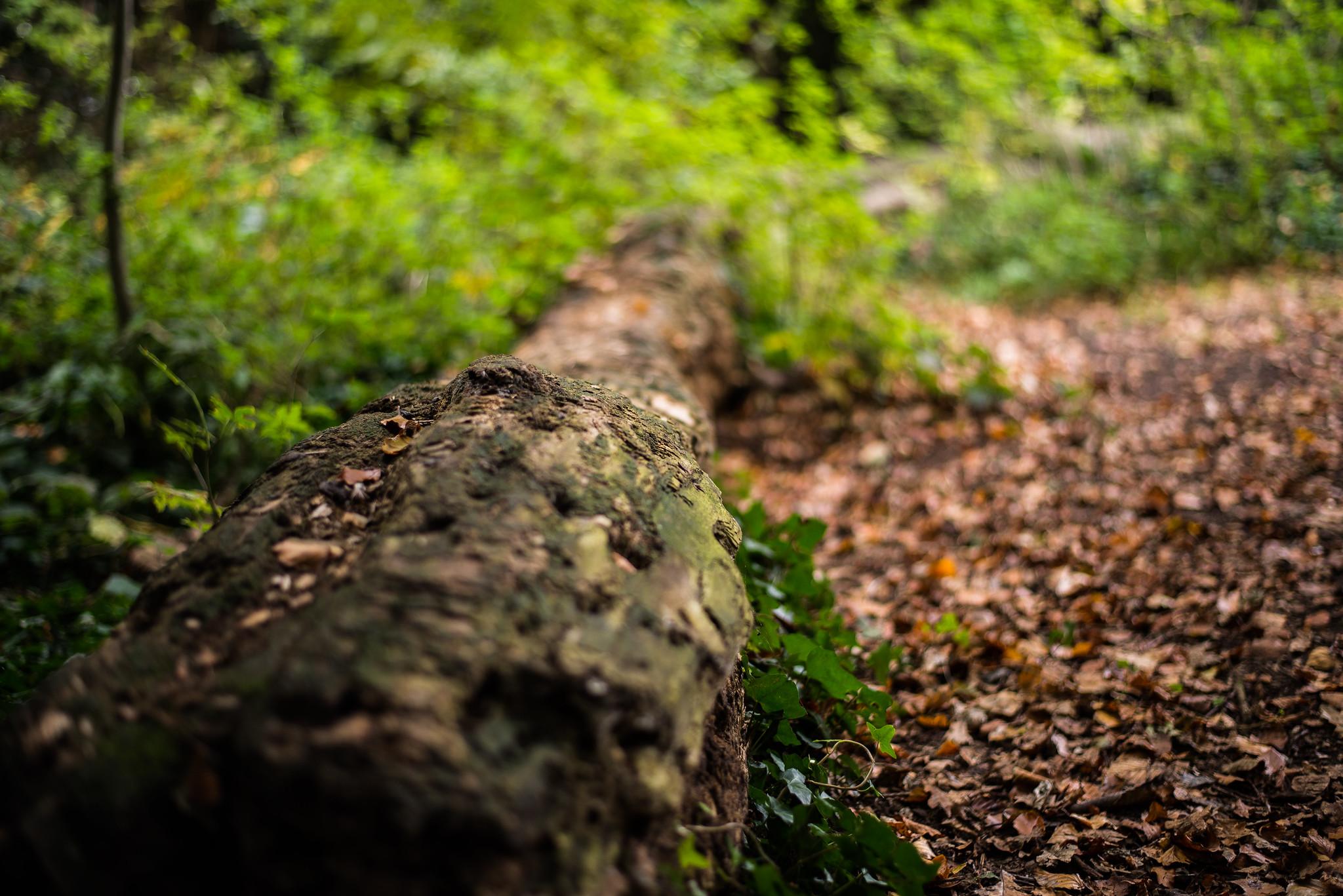 The Fallen Log