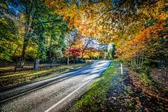 Mt Macedon Autumn Colours-29