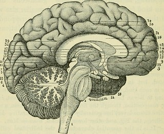 "Image from page 469 of ""The brain as an organ of mind"" (1896) 