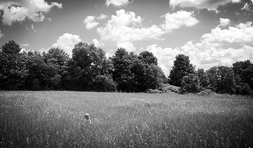 field of dreams | by D. Brandsma