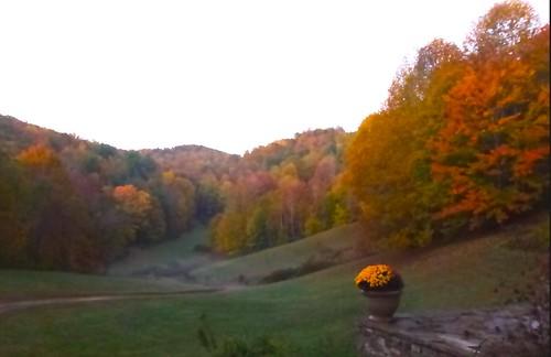 leaf change at dawn