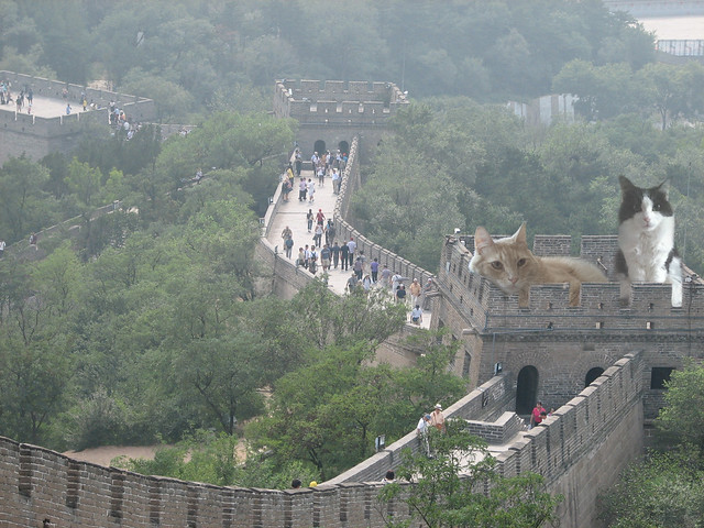 Cat Wall of China